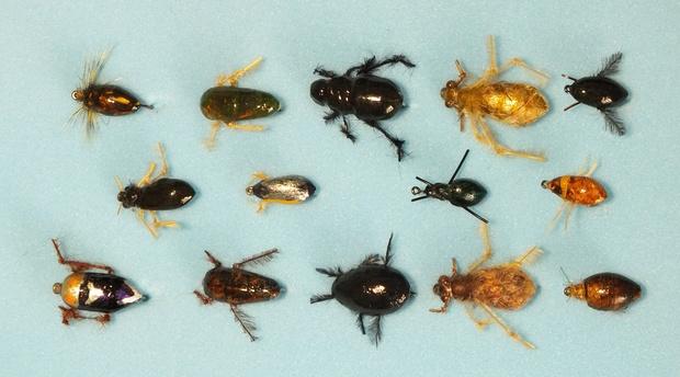 Thinking outside the box - A fresh look at aquatic beetles