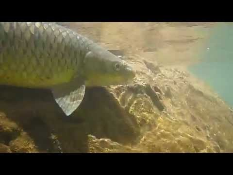 Fly fishing with Shilton Reel