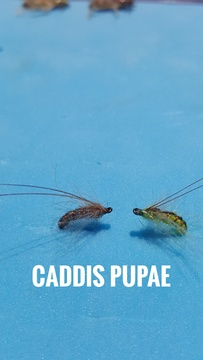 Caddis Pupae by Alan Hobson, Wild Fly Fishing in the Karoo