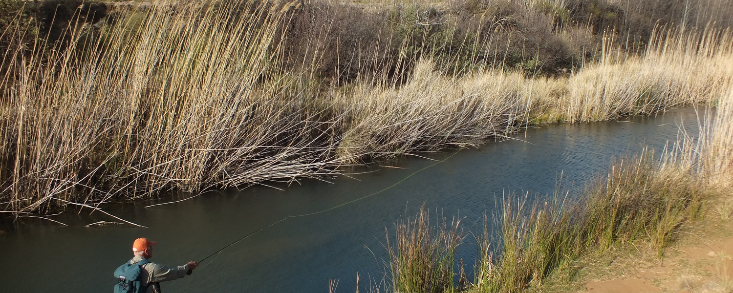 River fishing for trout in the Karoo, Wild Fly Fishing in the Karoo