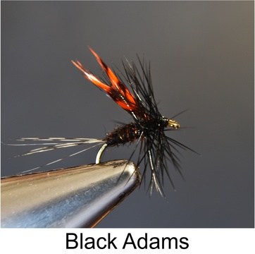 Black Adams, Adams, Fishing Flies, Speciality Flies