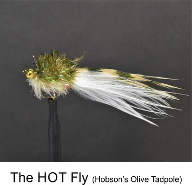 HOT Fly Olive by Alan Hobson, Wild Fly Fishing in the Karoo