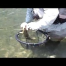 Why every fly fisherman should have a floating net