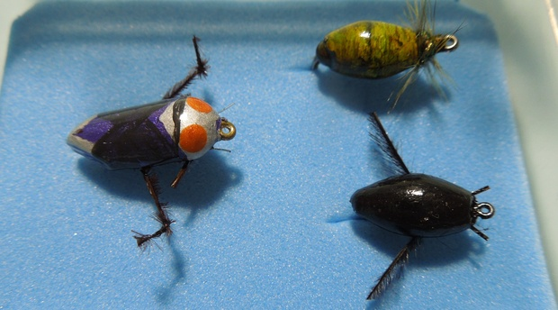 speciality flies, outside the box, floating snail, diving beetle, backswimmer, alan hobson