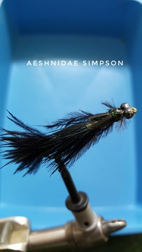 Aeshnidae Simpson by Alan Hobson, Wild Fly Fishing in the Karoo